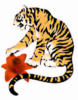 Tiger Lily by Encke, LLC Photo